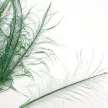 Emerald Green Burnt Ostrich Feather